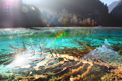 The Jiuzhaigou clear lake Royalty Free Stock Photo