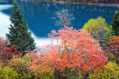 Jiuzhaigou. Ditch occurs dilute, scene specific, the original natural style, the `fairy tale world` reputation. A long sea, sword rock, NuoRiLang, tree, zharu stock images