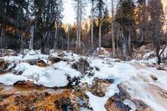 Jiuzhaigou Dolinny park narodowy Chiny zdjęcia royalty free