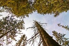 jiuzhaigou drzewa Fotografia Stock