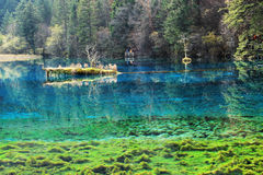 Jiuzhaigou five Flower Lake Stock Photography