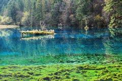 Jiuzhaigou five Flower Lake. Located in the Aba Tibetan and Qiang Autonomous Prefecture, Sichuan Province, Jiuzhaigou scenic spot center location. Jiuzhaigou Stock Photography