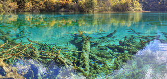 Jiuzhaigou five flower lake,sichuan province Stock Photo