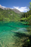 Jiuzhaigou grass pool Stock Images