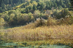Jiuzhaigou-Herbstlandschaft in China Stockfoto
