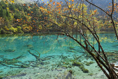Jiuzhaigou Lake Royalty Free Stock Images