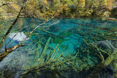 Jiuzhaigou Lake Royalty Free Stock Photos