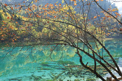 Jiuzhaigou Lake Stock Photography