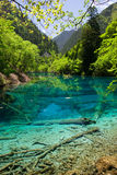 Jiuzhaigou mirror pool royalty free stock photo