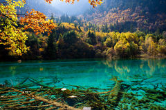 Jiuzhaigou National Park ,sicuan china. NO.9 Royalty Free Stock Photos