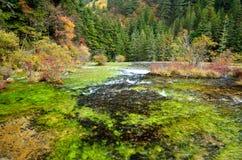 Jiuzhaigou National Park,Sichuan China. Jiuzhaigou National Park in autumn,Sichuan China Royalty Free Stock Images