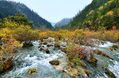 Jiuzhaigou National Park,Sichuan China. Jiuzhaigou National Park in autumn season,Sichuan China Stock Images