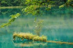 Jiuzhaigou nationalpark i Sichuan, Kina arkivfoto