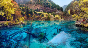 Jiuzhaigou nationalpark, Sichuan Kina Royaltyfria Foton