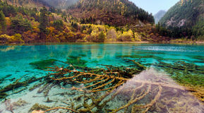 Jiuzhaigou nationalpark, Sichuan Kina Royaltyfri Bild