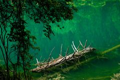 Lake and Trees in Jiuzhaigou Valley, Sichuan, China. Jiuzhaigou is one of the best natural sight in the would, due to its water, mountain, trees. it is located royalty free stock photo