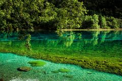 Lake and Trees in Jiuzhaigou Valley, Sichuan, China. Jiuzhaigou is one of the best natural sight in the would, due to its water, mountain, trees. it is located royalty free stock image