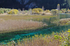 Jiuzhaigou reed lake. In autumn Stock Photography