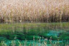 Jiuzhaigou reed lake Royalty Free Stock Image
