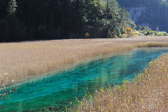Jiuzhaigou reed lake Royalty Free Stock Photos