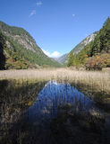 Jiuzhaigou reed lake Stock Photography