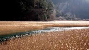 Jiuzhaigou reed lake Royalty Free Stock Images