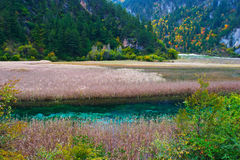 Jiuzhaigou Scene Royalty Free Stock Photo