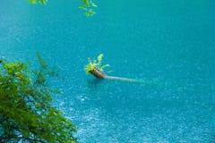 Jiuzhaigou sceneria, lokalizuje w Chiny jiuzhaigou scenicznym terenie, sławny turystyczny miejsce przeznaczenia w Chiny Większość fotografia stock