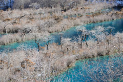 Jiuzhaigou Shuzheng lakes in winter Royalty Free Stock Photography