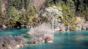 Jiuzhaigou sparking  lake in winter stock video footage