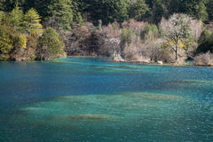 Jiuzhaigou sparkling lake  in winter Stock Images