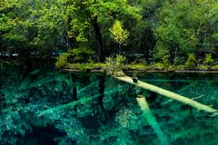 Озеро и деревья в Jiuzhaigou Valley, Сычуань, Китае стоковые изображения rf