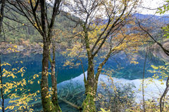 Jiuzhaigou Valley national park. Jiuzhaigou Valley Scenic and Historic Interest Area, Sichuan, China Royalty Free Stock Photos