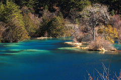 Jiuzhaigou in the winter Royalty Free Stock Photo