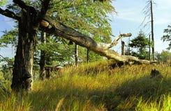jizera góry Zdjęcie Stock