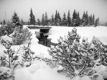 Jizerka-Fluss in Jizera-Bergen, Tschechische Republik lizenzfreie stockfotos