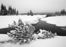 Jizerka rzeka w Jizera górach, republika czech Fotografia Stock