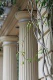 Jońskie kolumny z winogradami w podwórzu Fotografia Stock