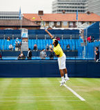 Jo wilfred tsonga Royalty Free Stock Images