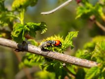Joaninha e mosca em um ramo fotografia de stock