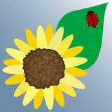 Joaninha na folha da flor ilustração royalty free