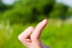 Joaninha no dedo Foto de Stock Royalty Free