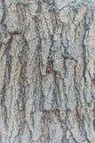 A joaninha rasteja ao longo da árvore à parte superior fotografia de stock