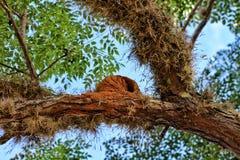A Joao de barro`s nest royalty free stock photos