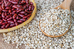 Job`s tear seed dried wooden spoon and red beans Royalty Free Stock Photo
