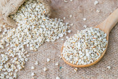 Job`s tear seed dried wooden spoon. On sack background Stock Photo