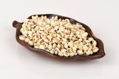 Job's tears grain seeds. Royalty Free Stock Photo