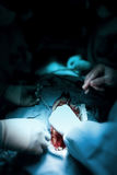 Job surgeons during open-heart surgery. Job surgeons during open-heart surgical operation stock photography