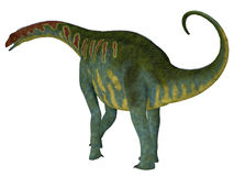 Jobaria Dinosaur Tail Royalty Free Stock Images