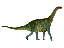 Jobaria Side Profile. Jobaria was a herbivorous sauropod dinosaur that lived in the Jurassic Period of the Sahara Desert in Africa Stock Photos